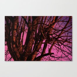 Spooky Trees - Pink  Canvas Print