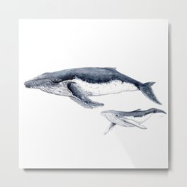 Humpback whale with calf Metal Print