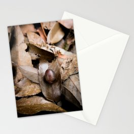 Donguri Deadfall Stationery Cards