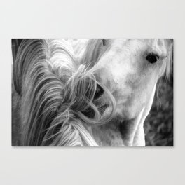 Horse Grooming Canvas Print