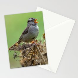Singing Sparrow Stationery Cards
