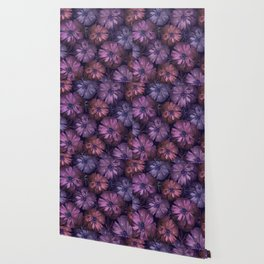 Pink and violet poppies Wallpaper