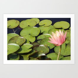 Pretty in Pink Lily Art Print