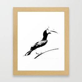 Oriental Pied Hornbill Framed Art Print