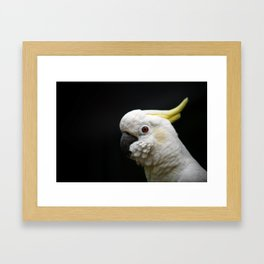 Cockatoo close-up in profile. Framed Art Print