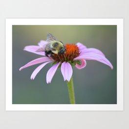 Hard Working Honey Bee Art Print
