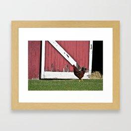 Rooster Strut Framed Art Print