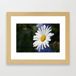 White Daisy Flower Loves Me Loves Me Not Framed Art Print