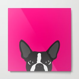 Boston Terrier Hot Pink Metal Print