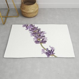 Lavender Lavandula flowering plants mint family Lamiaceae Canary Rug