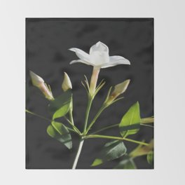 Close Up Of Jasminum Officinale Throw Blanket