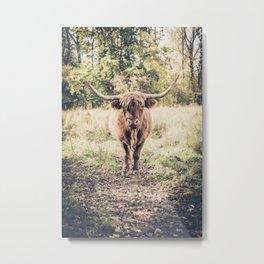Highland scottish cow cattle long horn Metal Print