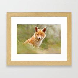 The Face of Innocence .:. Red Fox Kit Framed Art Print