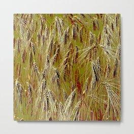 Field of barley II Metal Print