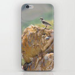 Cape Wagtail iPhone Skin