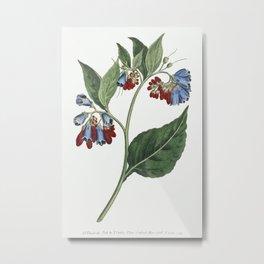 Symphyum Asperrim (Prickley Comfrey) (1806) Image from The Botanical Magazine or Flower Garden Displ Metal Print