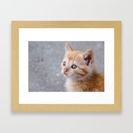 Adorable orange tabby kitten with magic, beautiful eyes looking at horizon. Framed Art Print