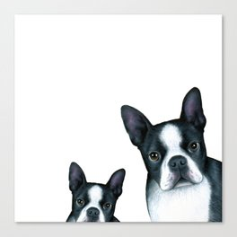 Boston Terrier Dogs black and white Canvas Print