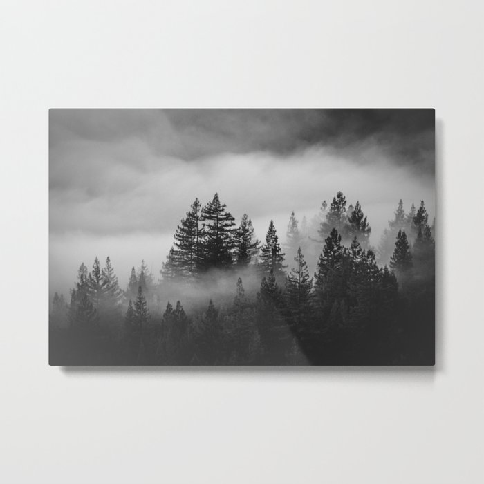 Forest of Fog Metal Print
