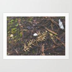 White Mushroom on Forest Floor Art Print