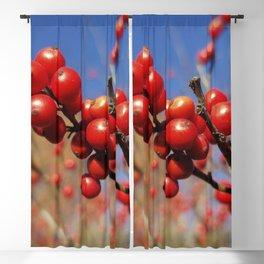 Winterberries glow against a blue autumn sky Blackout Curtain