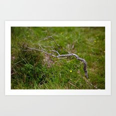 Dried Twig Art Print