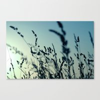 grass Canvas Prints featuring grass by Ingrid Beddoes photography