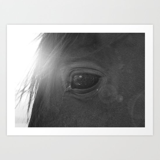 Equine eye Art Print