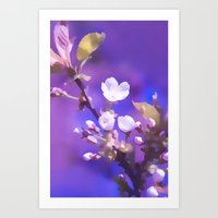cherry blossoms Art Prints featuring CHERRY BLOSSOMS by INA FineArt