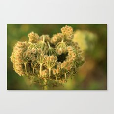 Queen Anne's Lace Flower About to Bloom Canvas Print