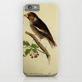 Grosbeak, loxia coccothraustes25 iPhone Case
