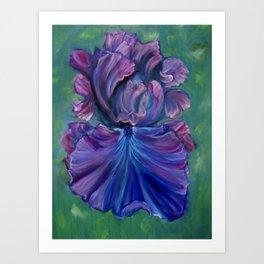 Magenta Iris Art Print