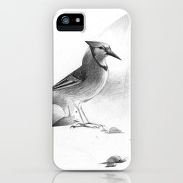 Blue Jay and Snails (title in description) iPhone Case