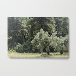 """Travel Photography """"Olive tree in magical green forest on Skopelos island in Greece"""" fine art photo print in color. Metal Print"""