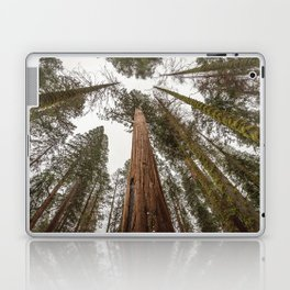 Sequoia Stretch - Nature Photography Laptop & iPad Skin