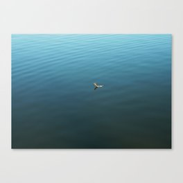 Feather on Water Canvas Print