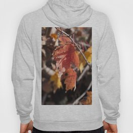 Fall in Manchester, NH Hoody