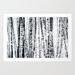 Birch Trees In Winter Kunstdrucke