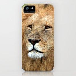 Masai Mara Lion Portrait iPhone Case