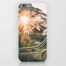 The Giant Hogweed @ Sunset iPhone Case