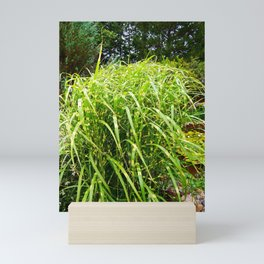 Zebra Grass Mini Art Print