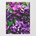 Lilac by cgaff