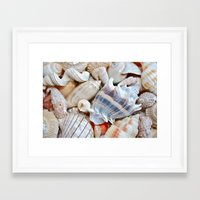 shells Framed Art Prints featuring Shells by Taylor Payne