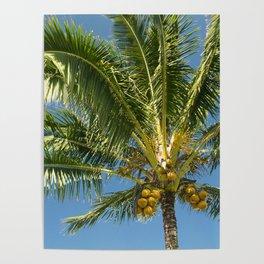 Hawaiian Coconut Palm Tree Poster