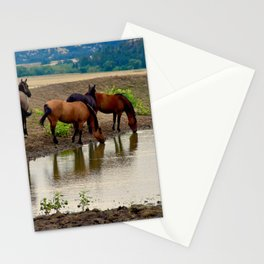 Mustangs at Watering Hole Stationery Cards