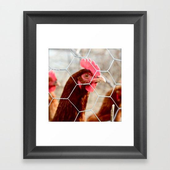 Chicky Chicky  Framed Art Print