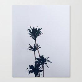 Dracaena Plant Canvas Print