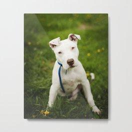 Pit Bull Puppy Metal Print