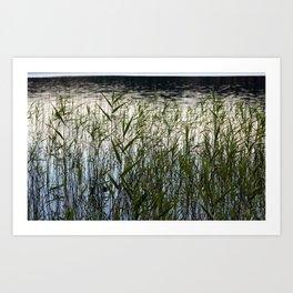 Lake Plants Art Print