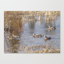 Ducks on Marsh Canvas Print